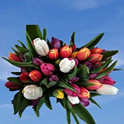 Assorted Tulip Flowers | 60 Assorted Tulip Flowers