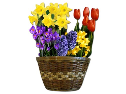 Deluxe Flower Bulb Garden Basket
