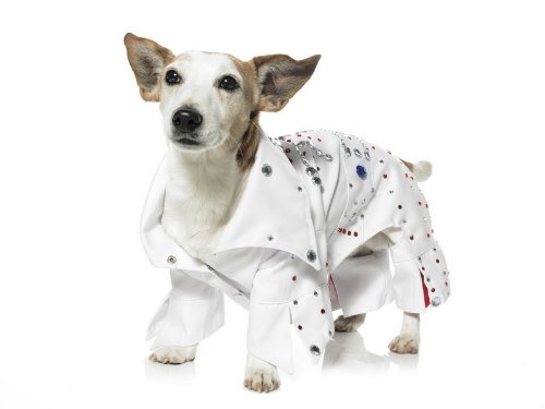Rock Star Dog Pet Costume