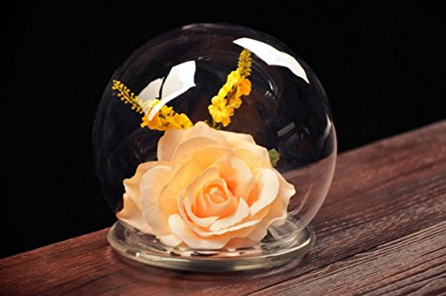Bloss Creative DIY Transparent Glass Landscape Spheres,Glass Bell Jar, 4.20