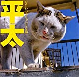 平太—なにわのぶちゃいどる猫