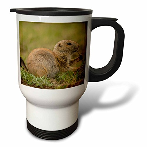 Danita Delimont - Animal - Oklahoma, Wichita Mountains. Aggressive black-tailed prairie dog. - 14oz Stainless Steel Travel Mug (tm_231461_1)