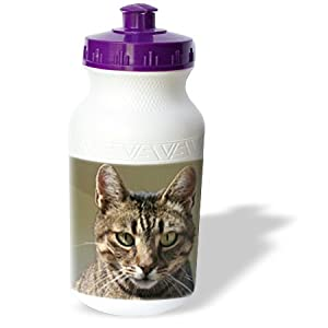 Taiche - Photography - Tabby Cats - Tabby Cat Portrait - animal, moggie, tabbies, tabby cat, cat, cats, cute - Water Bottles