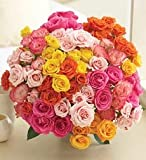 100 Blooms of Multicolored Spray Roses
