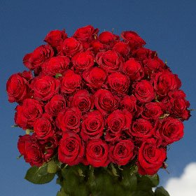 Anniversary Delivery Roses- 50 Red Roses