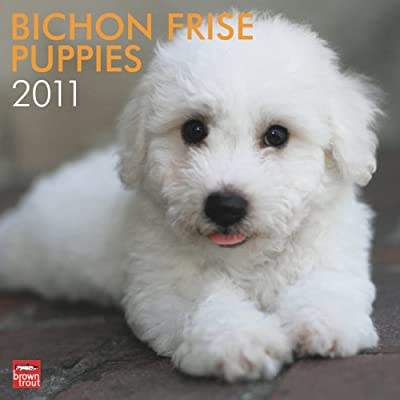 Bichon Frise Puppies 2011 Square 12X12 Wall: BrownTrout Publishers Inc