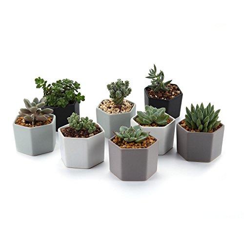 t4u-72cm-ceramic-six-sizes-semi-luster-surface-sucuulent-plant-pot-cactus-plant-pot-flower-pot-conta