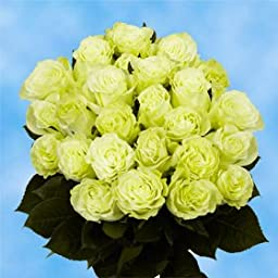 2 Dozen Fresh Cut Green Roses | Extremely Gorgeous! | Fresh Flowers Express Delivery | Perfect for Birthdays, Anniversary or any occasion.