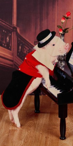 Cute Pig Wearing Clothes & Hat Playing Piano - Plywood Wood Print Poster Wall Art front-1049478