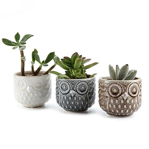 t4u-275-inch-ceramic-owl-pattern-sucuulent-plant-pot-cactus-plant-pot-flower-pot-container-planter-f