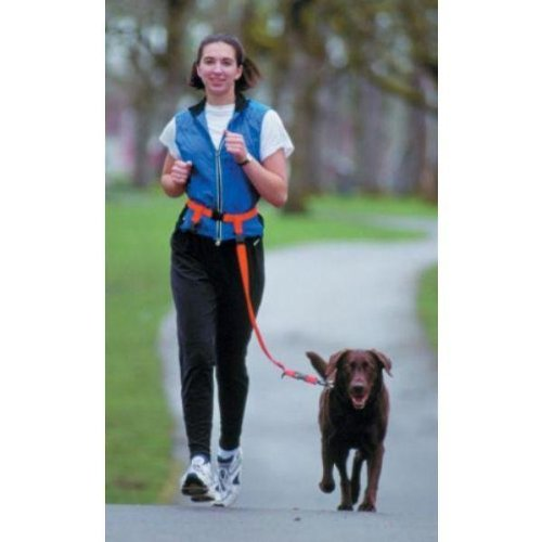 The Buddy System - Hands Free Leash - Regular Dog System - Black Regular