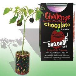 The Patent Magic Plant- Chocolate Pepper