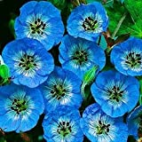 Geranium wallichianum 'Buxton's Blue' Perennial Seeds By Thompson & Morgan 91386-26