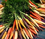 Indian Gardening Carrot Rainbow Blend (Daucus Carota) Vegetable Seeds 20 Seeds