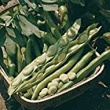 Broad Bean Bunyards
