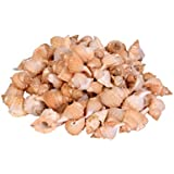 Sea Shells Shankh Med Size ,500 Gm Pack ,Used In Aquariums ,Art & Crafts ,Decorations, Table Decoration , Approx,( 115- 125 Pcs ) Size 5 X 2.75 X 2.5 Cms
