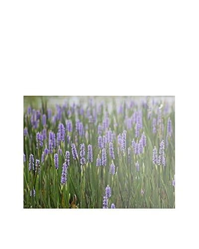 Patty Tuggle Purple Lake Flowers Canvas Art