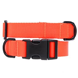 Max & Zoey 1-Inch Wide Basic Dog Collar, Large, Bright Orange