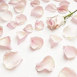 Farm Fresh Natural Pink Rose Petals - 3000 petals
