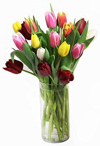 30 Stem Dare to Impress Fresh Cut Tulips
