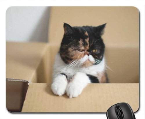 Kittie's box Mouse Pad, Mousepad (Cats Mouse Pad)
