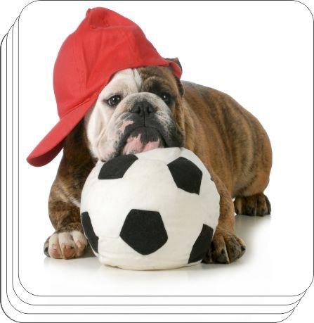 Rikki KnightTM English Bulldog Puppy Sports Design - Square Beer Coasters