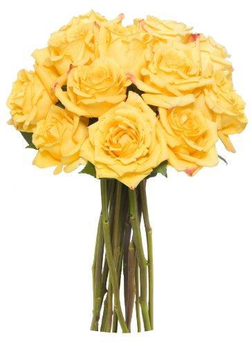 Benchmark Bouquets Dozen Yellow Roses, No Vase