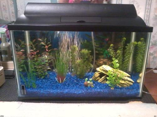 Pet Supplies : Aquarium Starter Kits : TSN Starter Kit 10gal : Amazon ...