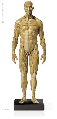 List of Anatomy Human Figure Mannequins for Artists | Parka