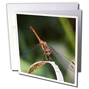 Jackie Popp Nature N Wildlife insects - Brown dragonfly eyes - 12 Greeting Cards with envelopes (gc_19163_2)