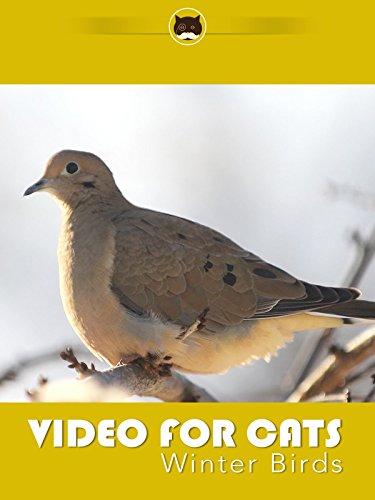 Video for Cats Winter Birds