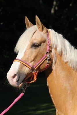 Halfter KARLIE CATAGO NEON pink/grau/orange pink/grau/orange