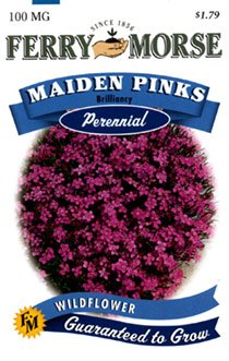 Ferry-Morse Perennial Flower Seeds 1077 Maiden Pinks 100 Milligram Packet