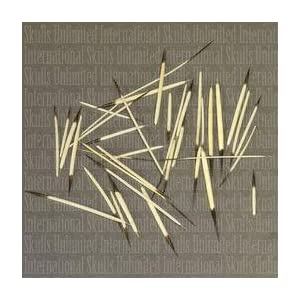Amazon.com: American Porcupine Bag of Quills (approx. 30