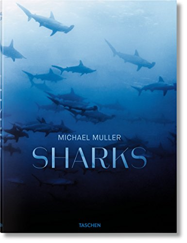 Download Michael Muller: Sharks, Face-to-Face with the Ocean's Endangered Predator