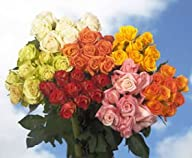 100 Best Roses Assorted Colors Four D…