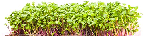 new-microgreen-zesty-3-pack-refill-pre-measured-soil-seed-use-with-window-garden-multi-use-15-x-6-pl