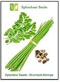 Splendour Seeds Drum Stick-Moringa,Murangai, Saijan Ki Phalli,Saragavo (5 Seeds)