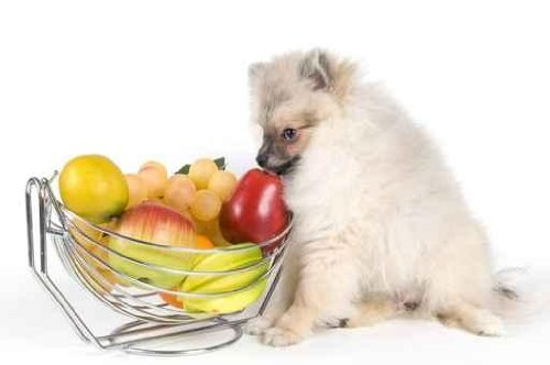 The Puppy of the Spitz-dog and Fruit - 24