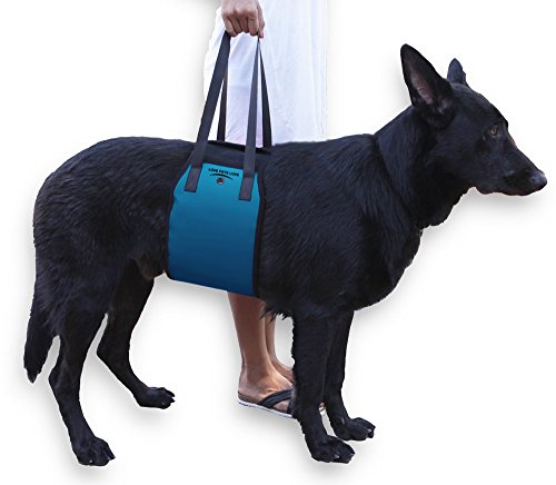 How To Train Your Dog To Walk On Back Legs