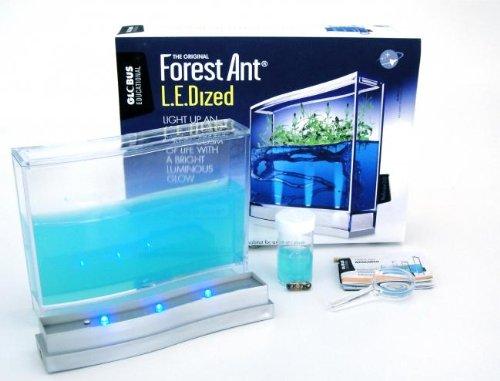 hormiguero-de-gel-azul-con-luz-y-semillas-hormigas-incluidas-gratis