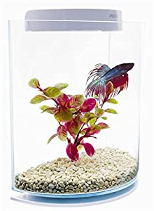 Marina Aquarium Betta Kit Halfmoon 3 L