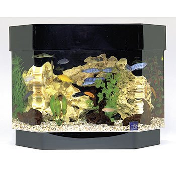 SeaClear 10 gal Flat Back Hexagon Mini Kit Acrylic Aquarium, 23 by 11 ...