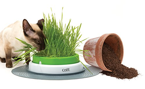Catit Senses Grass Planter 4