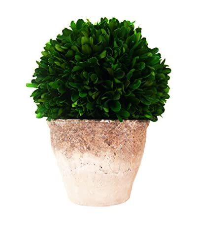 Creative Displays Preserved Boxwood Ceramic Pot, Green