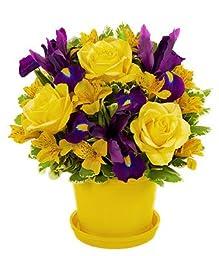 Lilac - Eshopclub - Online Flower - Anniversary Flowers - Wedding Flowers Bouquets - Birthday Flowers - Send Flowers