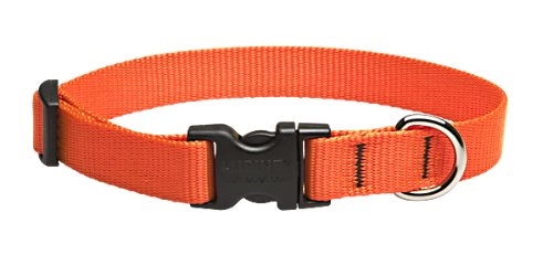 Lupine 3/4-Inch Blaze Orange 9-14-Inch Adjustable Dog Collar for Small to Medium Dogs