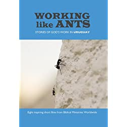 Working Like Ants
