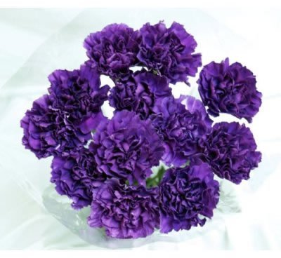 Carnation Wedding Bouquet 40 Fresh Cut Moonshade Purple Carnations Advance Ordering Recommended