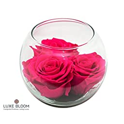 Luxe Bloom Sangria Preserved Roses | Lasts 60 days | 3 sangria (hot pink) roses & greens in a 4"|256|256|?|0e719ea3567218d0fd330e84ef2c34cf|False|UNLIKELY|0.3507814109325409
